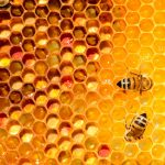 beehive construction 150x150 - Swarm Collection