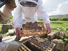Studying Bees - Education